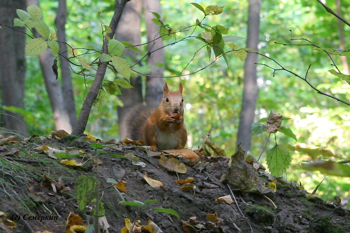 http://l7e7o7n.narod.ru/foto/park/park11.jpg